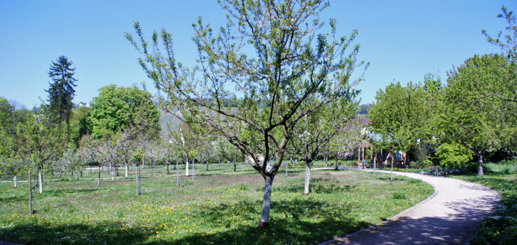 Parks in Heilbronn - Botanischer Obstgarten