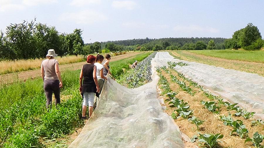 Solawi - Solidarische Landwirtschaft Heilbronn Mosbach 2