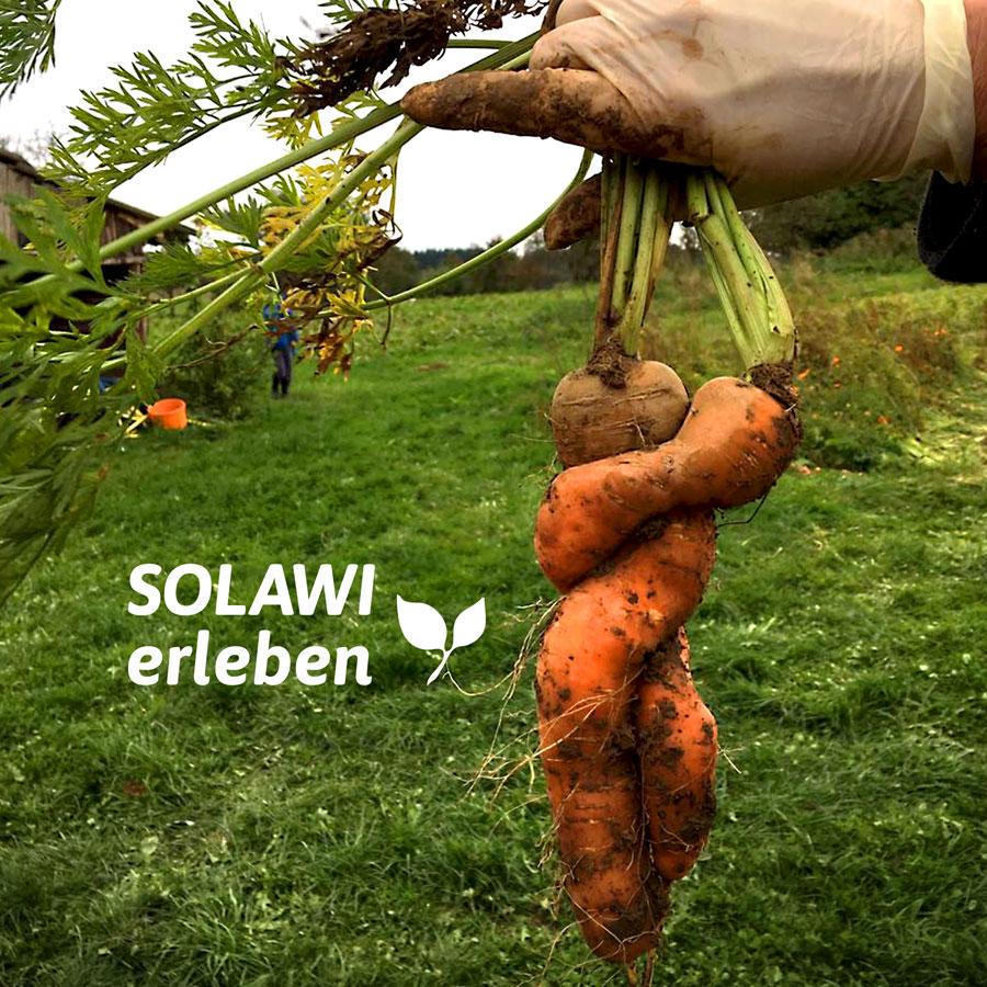 Solawi - Solidarische Landwirtschaft Heilbronn Mosbach 5